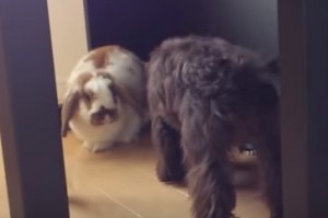 うさぎと犬の同居