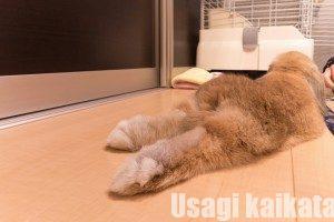 ウサギの足裏②