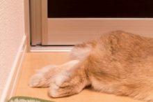 ウサギの足裏①