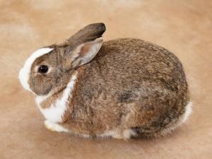 ウサギが足ダンする理由