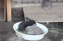 小学校のウサギ小屋