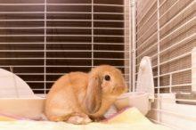 ウサギはキャベツ大丈夫?