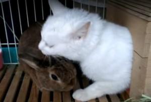うさぎと猫の同居