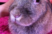 爪が伸びてしまったウサギ
