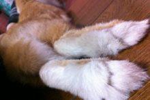 後ろ足の足裏の画像